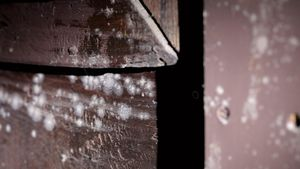 An zahlreichen Altären, die teilweise aus dem 15. Jahrhundert stammen, ist starker Pilzbefall entdeckt worden. | Foto: Armin Fischer