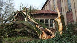 Ein Baum ist auf das Dach der Antoniuskirche in Münster gestürzt. | Foto: Johannes Bernard