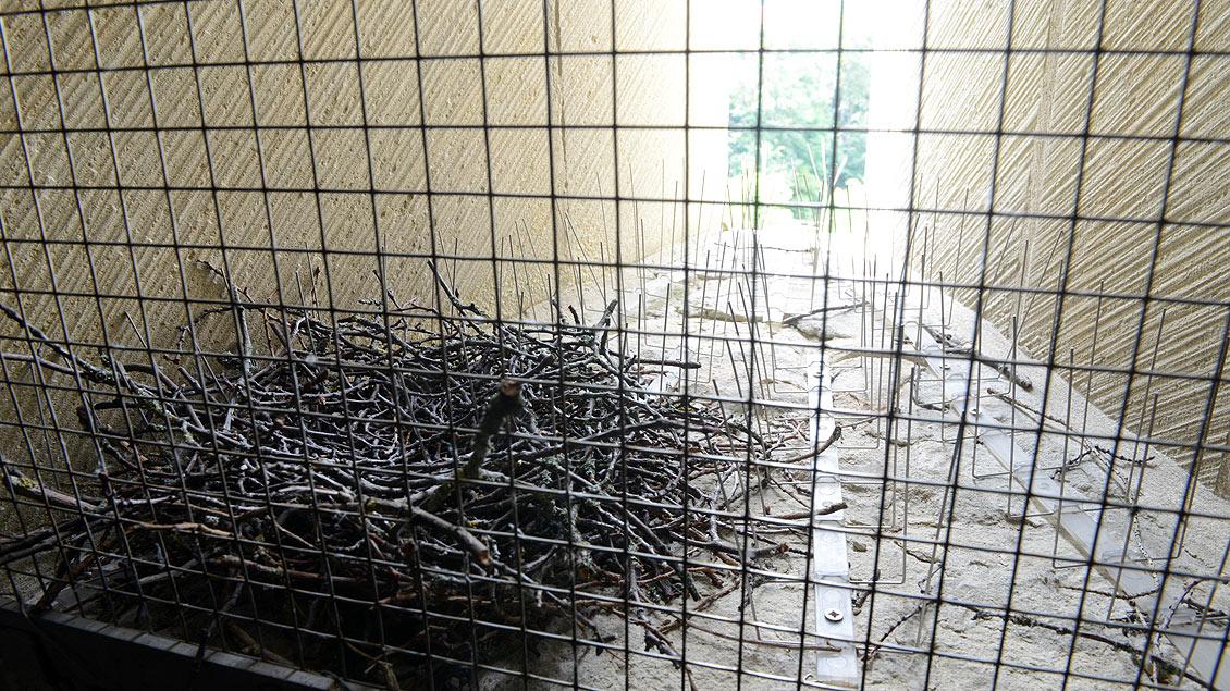Ein Taubennest im Domgewölbe.