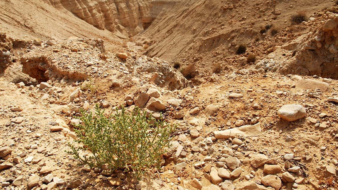 Unwirtliches Gelände: in der Negev-Wüste in Israel.