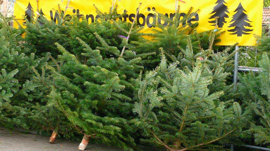 Weihnachtsbaumverkauf.