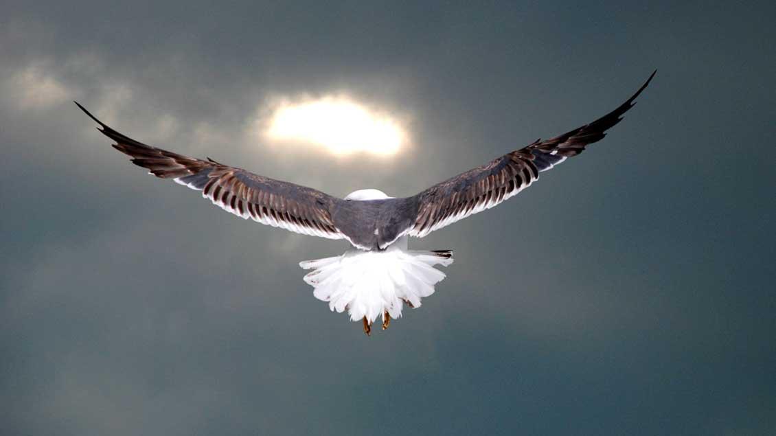 Eine Taube gilt als Symbol für Frieden.
