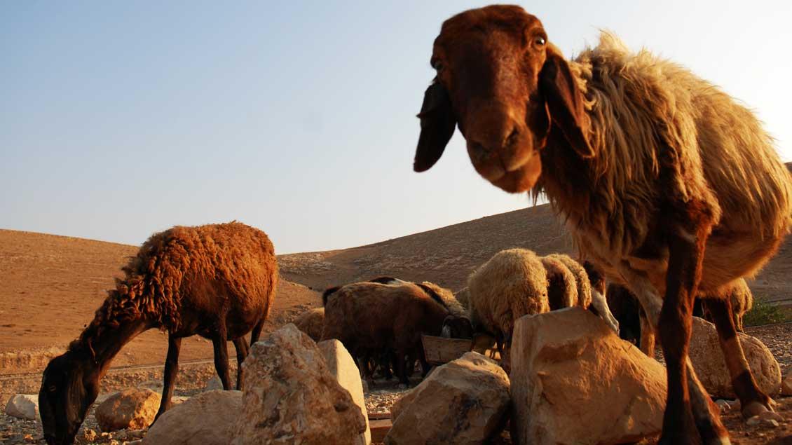 """Es geht darum, wem die Schafe öffnen, wem sie vertrauen, wem sie folgen. Jesus sagt dazu: """"Ich bin die Tür."""""""