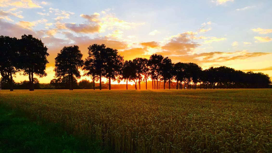 Sommerabend im Münsterland.