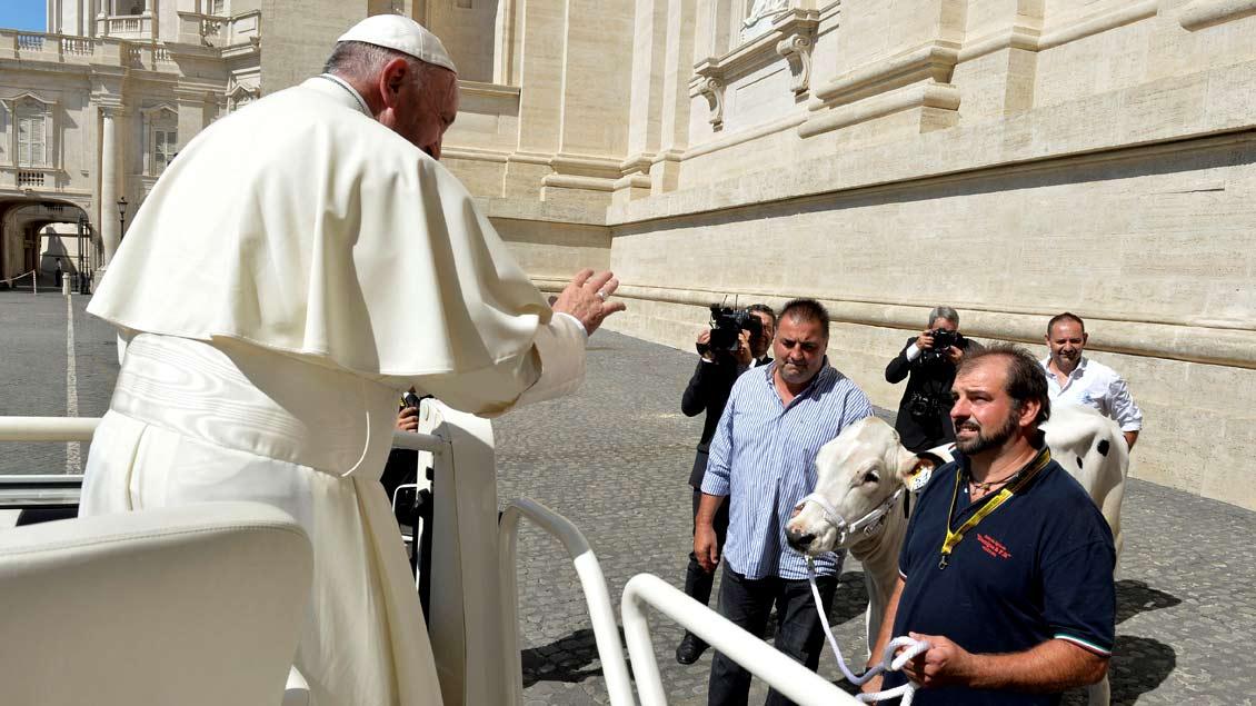 Papst Franziskus und Lou, die Kuh, kurz vor der Generalaudienz am Petersdom. Foto: Reuters