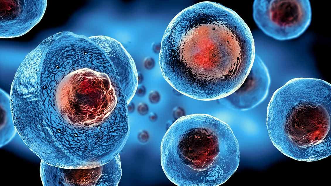 Darstellung embryonaler Stammzellen.