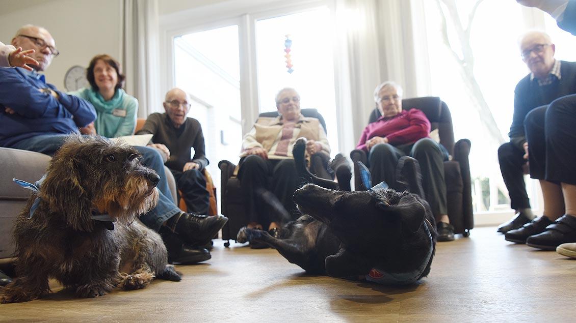 Auch die Hunde habe jede Menge Spaß am Besuch. | Foto: Michael Bönte