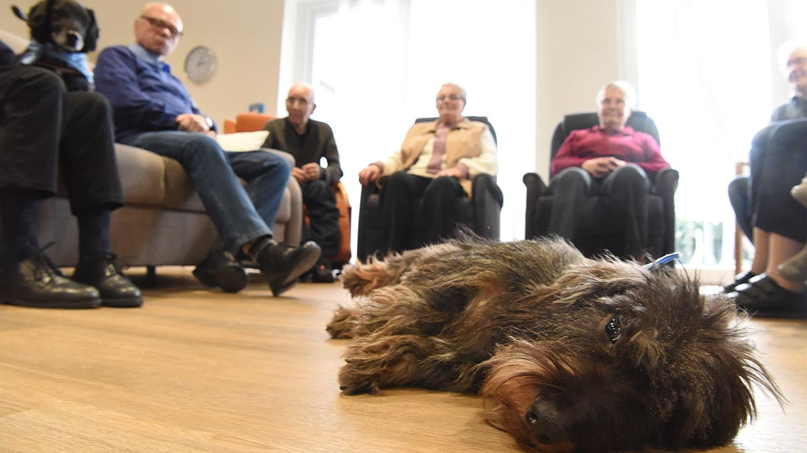 Therapie-Pause: Barnie braucht mal etwas Ruhe. | Foto: Michael Bönte