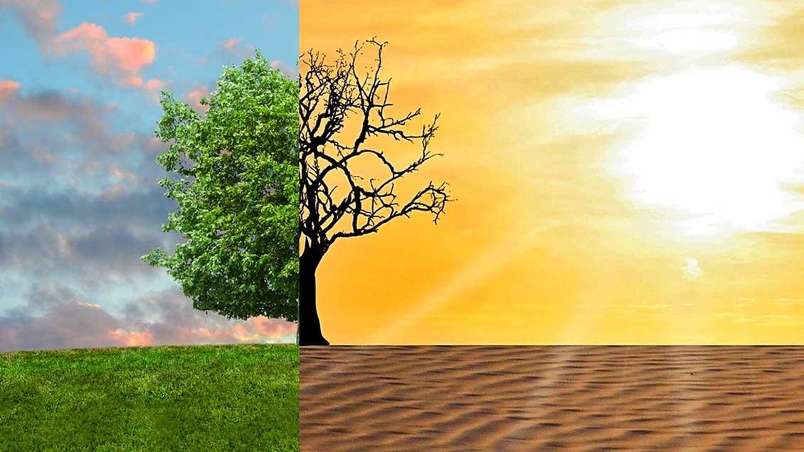 Ein zur Hälfte von der Sonne verdorrter Baum