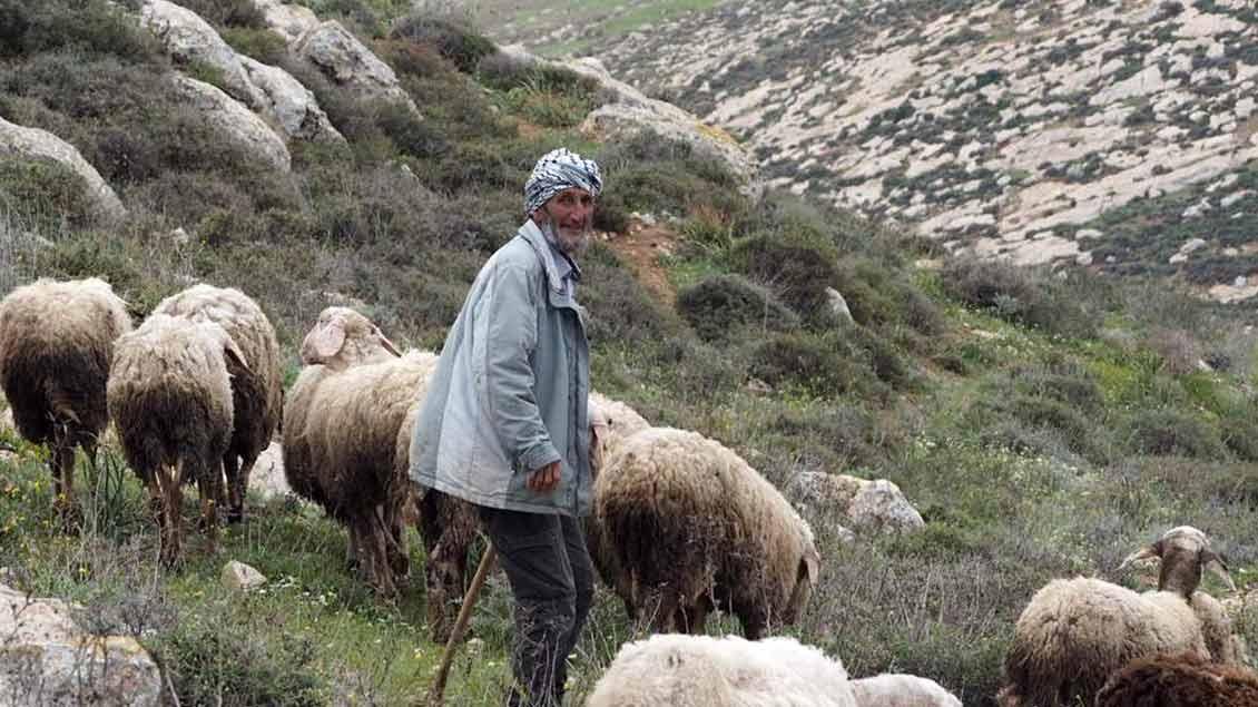 Schäfer Abu Tarik kämpft um sein Stück Land.