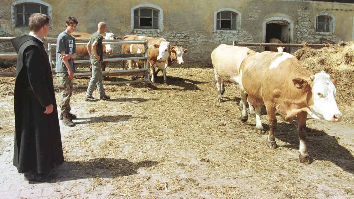 Ein Mönch und Kühe in der Abtei Plankstetten
