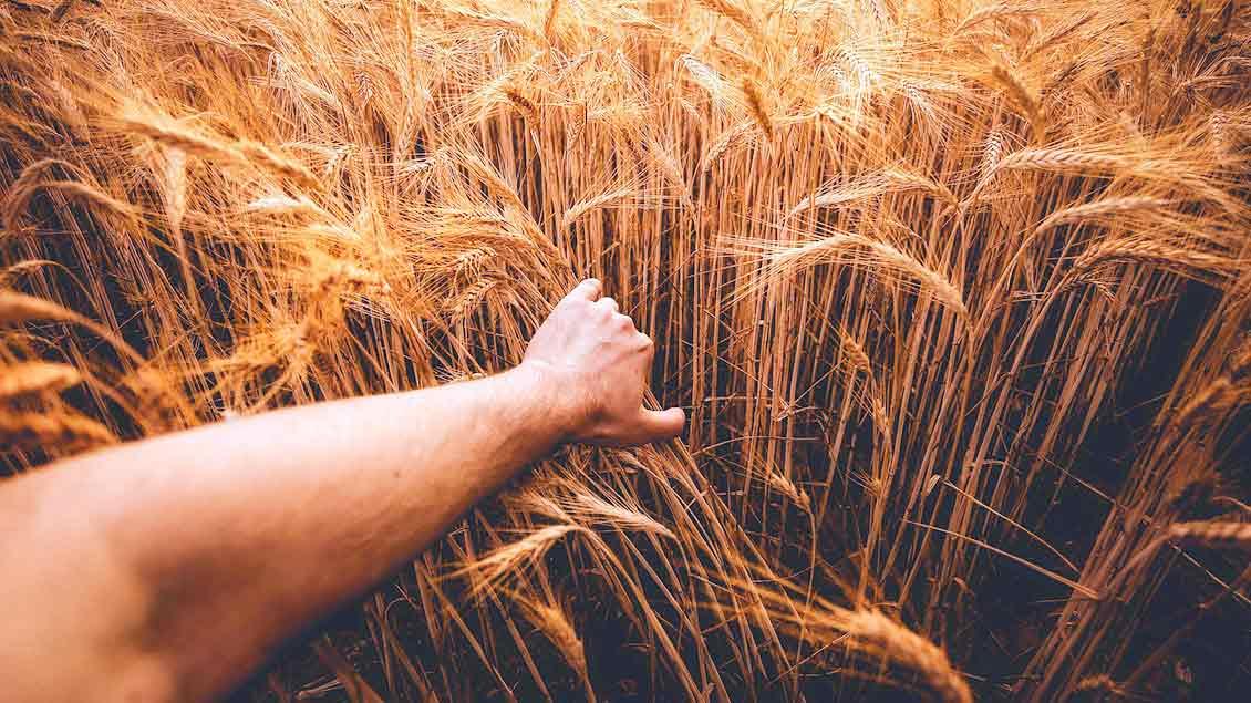 Eine Hand streicht über Getreide