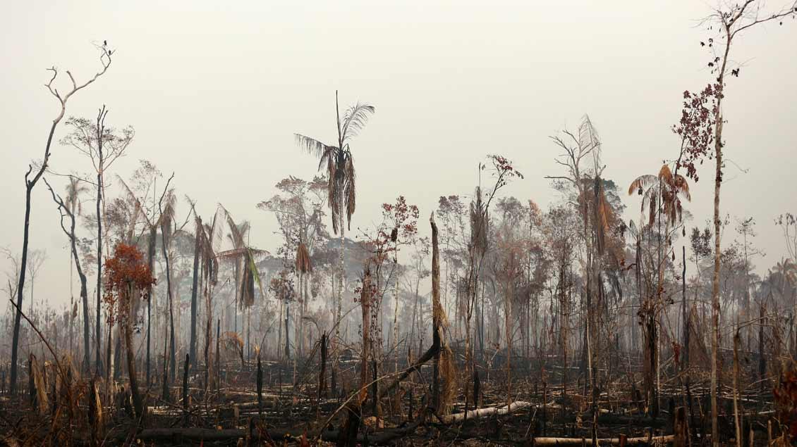 Verbrannter Wald bei Boca do Acre, Amazonasgebiet.
