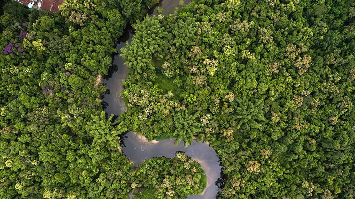 Blick auf den Amazonas