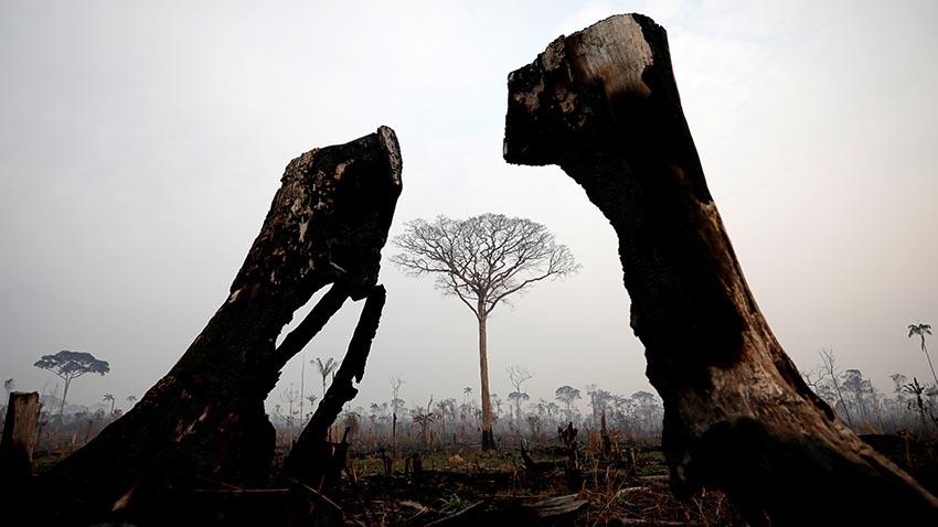 Verbrannte Bäume im Amazonas-Gebiet