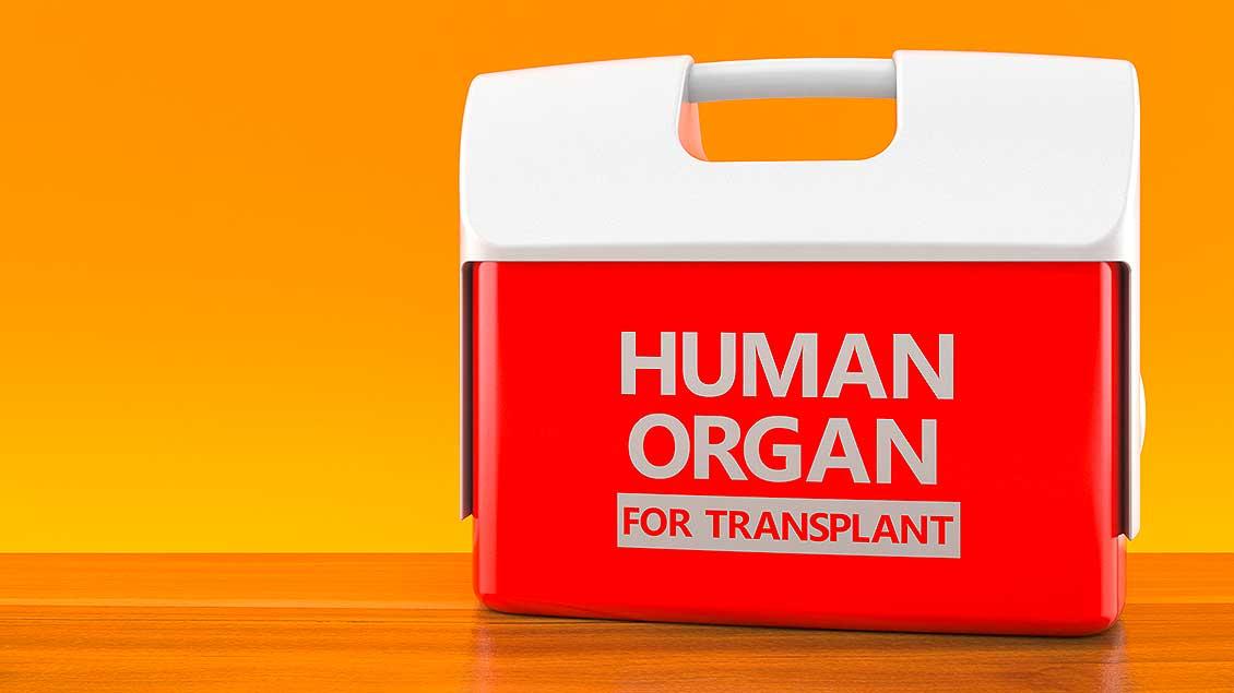 Organ-Box Foto: Talaj (Shutterstock)