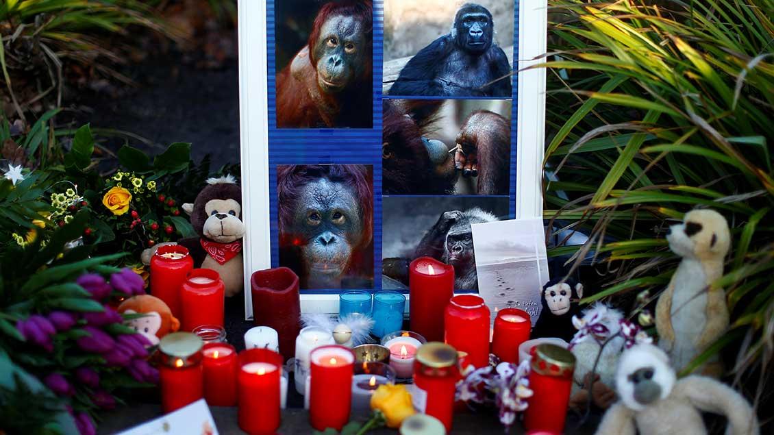 Kerzen vor einem Bild mit einigen der getöteten Affen in Krefeld.