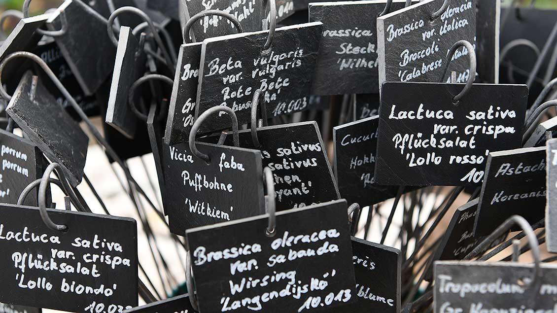 In einem Eimer stehen viele Schilder mit Sortenbezeichnungen.