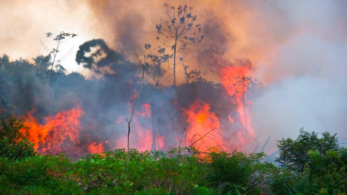 Waldbrände im Sommer 2019 im Amazonas-Gebiet Foto: Pedarilhosbr (Shutterstock)