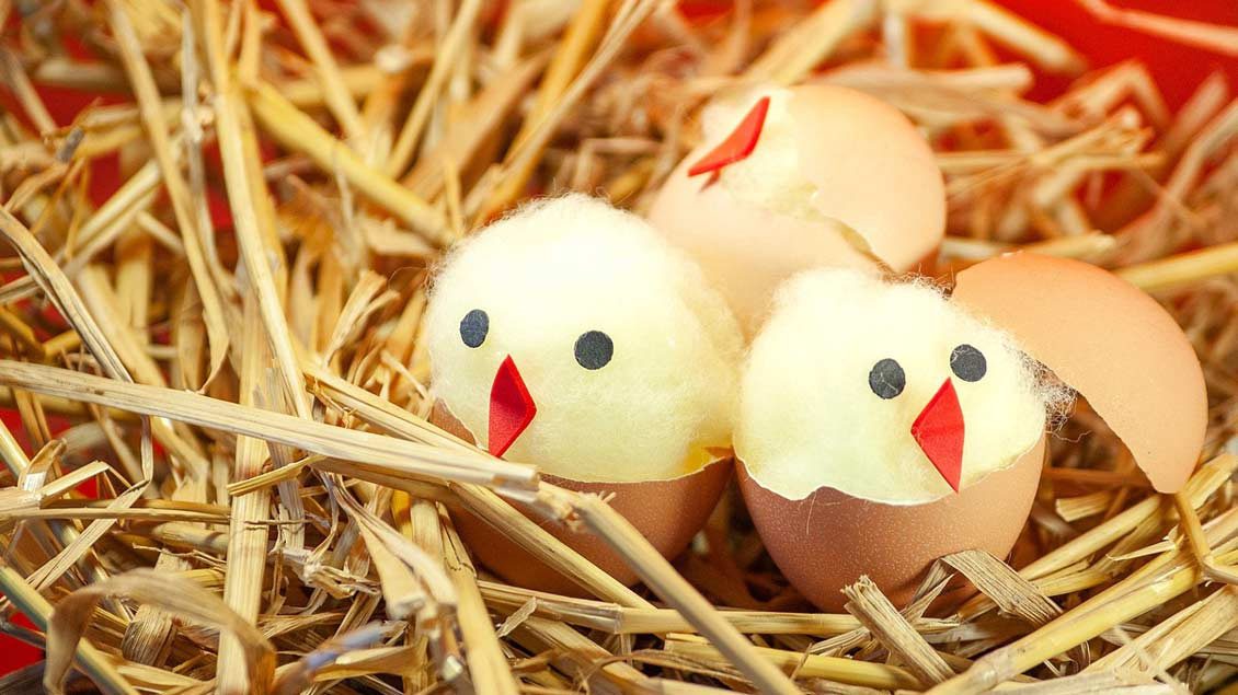 Watte-Küken in Eiern.