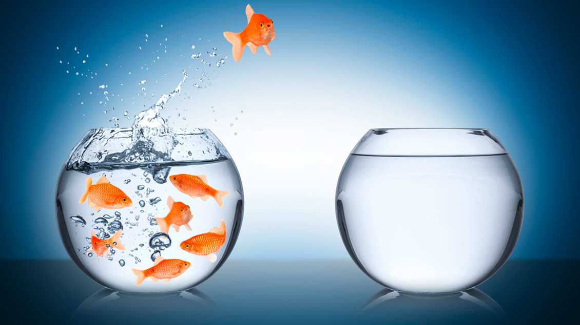 Ein Goldfisch springt von einem Glas in ein anderes.