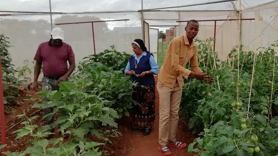 Das Gewächshaus auf dem Gelände des Schulzentrums liefert eigentlich Salat und Gemüse für die Schulspeisung. Derzeit kann es aber nicht bewirtschaftet werden. | Foto: pd
