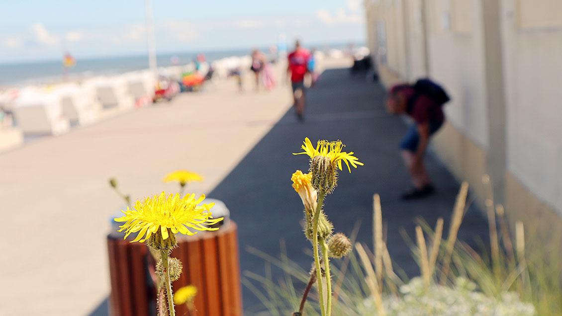 Die Sommersonne sorgt auf der Uferpromenade für Ferienstimmung. | Foto: Michael Rottmann